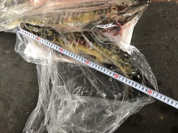 2017年10月9日 別刈漁港にてアキアジ釣り 005