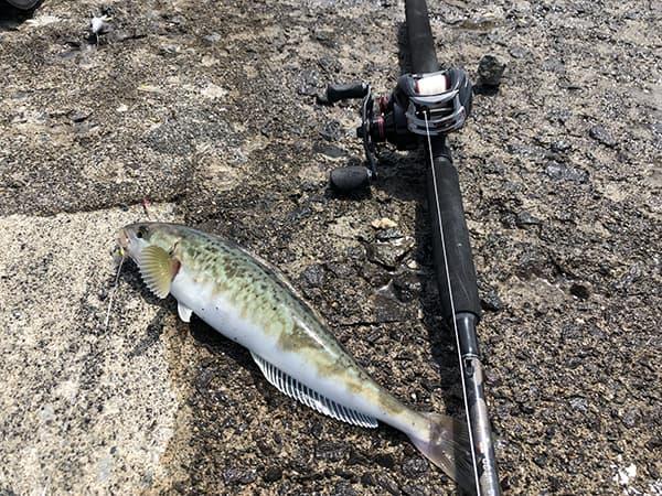 増毛港で春のホッケ釣り00