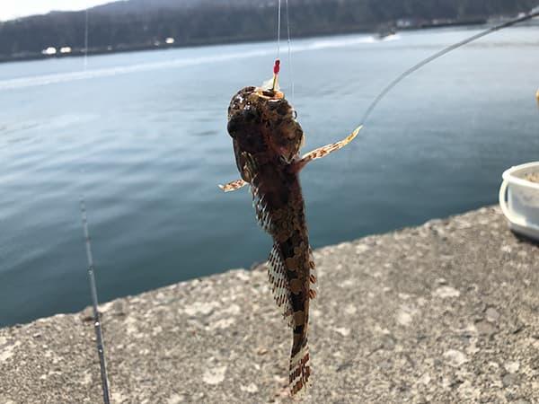 増毛港で春のホッケ釣り05