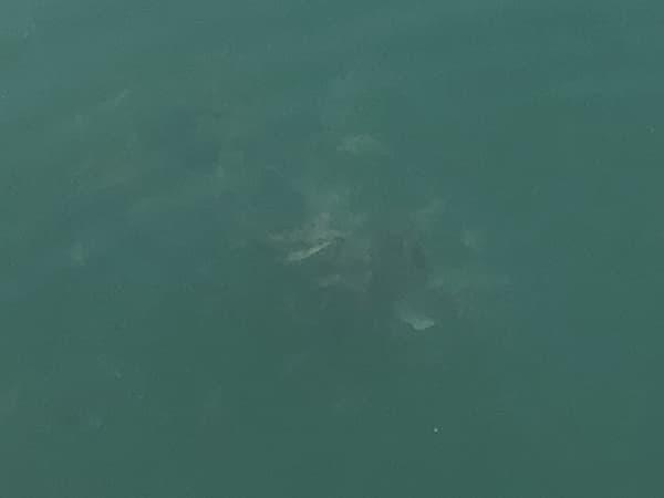 増毛港で春のホッケ釣り08