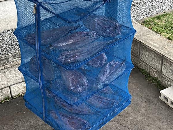 増毛港で春のホッケ釣り17
