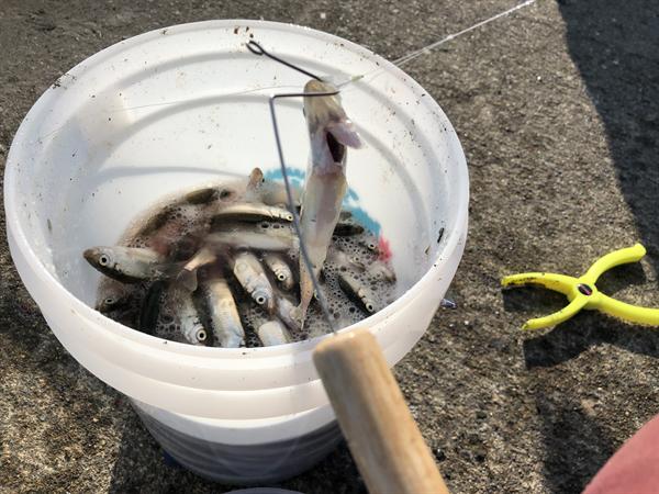 サビキ釣り用針外し(フックリリーサー)の作り方005