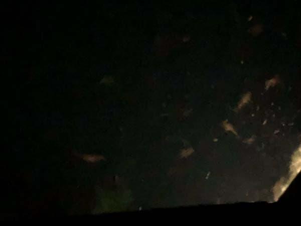 紋別港 自作集魚灯でマイワシが爆釣007