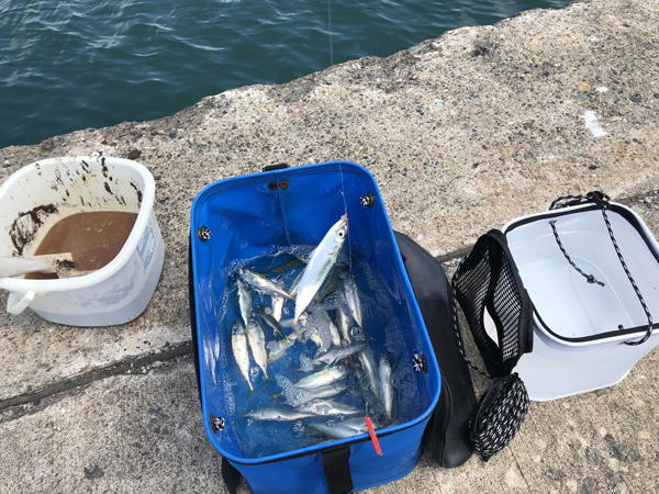留萌港で小鯖のサビキ釣り、大爆釣002